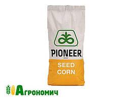 Насіння кукурудзи П9000/ P9000 укр (ФАО 310)