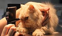 Энуклеация (удаление) глазного яблока ( 1 глаз): собака до 15 кг