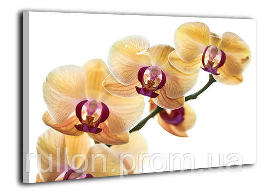 "Картина на холсте YS-Art XP144 ""Цветы 14"" 50x70"