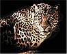 Картины по номерам 40*50 см В КОРОБКЕ Леопард Artstory