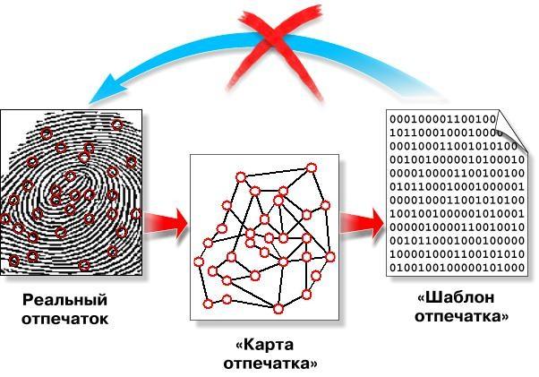 Схема создания биометрического шаблона отпечатка пальца