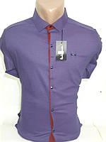 Рубашка мужская Paul Smith vd-0039 синяя приталенная в принт стрейч коттон Турция трансформер