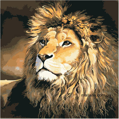 Картины по номерам 40*40 см БЕЗ КОРОБКИ Гордый лев Artstory