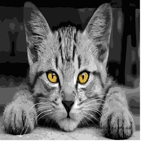 Картины по номерам 40*40 см БЕЗ КОРОБКИ Серый кот Artstory