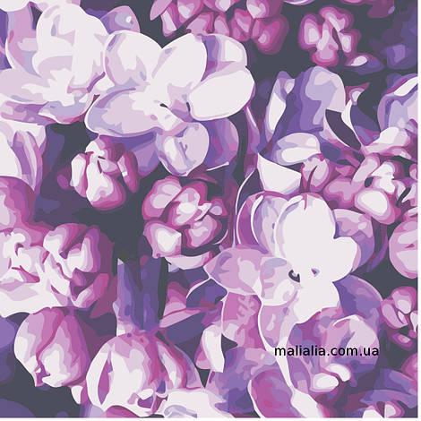 Картины по номерам 40*40 см БЕЗ КОРОБКИ Цветы сирени Artstory