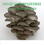 Мицелий Вешенки (Міцелій Гливи), фасовка по 2 кг., фото 2