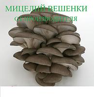 Мицелий Вешенки ( Міцелій Гливи), фасовка по 2кг.