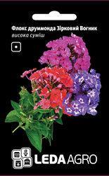 Семена флокса Друммонда Звездный Огонек, 0,2 гр., высокая смесь