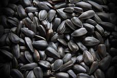 Семена Подсолнечника Майсадур семенс