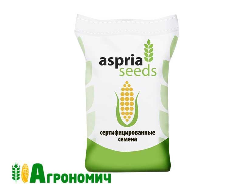 Насіння кукурудзи АС 14275 ФАО 550 Аспрія (Aspria)