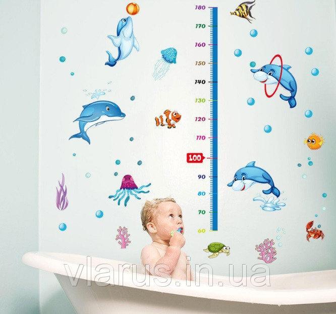 Настенная наклейка Ростомер с дельфинами
