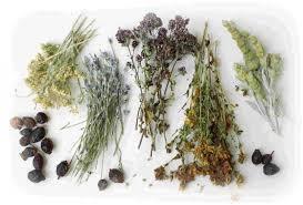Лікувальні трави та збори