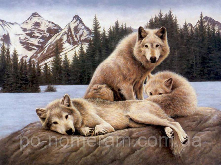 Картина из страз Алмазная мозаика Волки на отдыхе (DM-270) 50 х 38 см (Без подрамника)