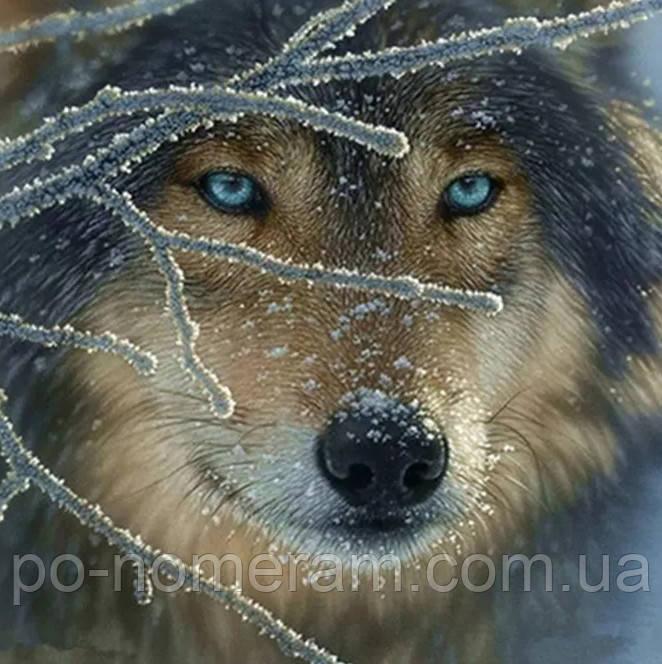 Картина алмазная вышивка Алмазная мозаика Взгяд волка (DM-273) 40 х 40 см (Без подрамника)