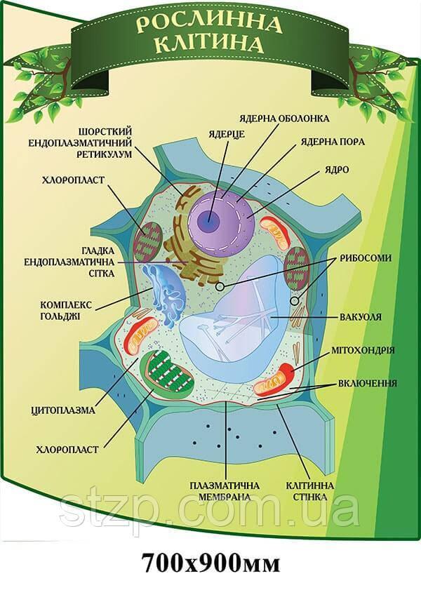 Стенд Растительная клетка зеленый