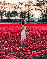Картина по номерам 40х50 Девушка в поле тюльпанов (GX24932), фото 1