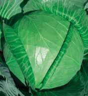 Семена капусты б/к Копенгаген маркет 100 гр. Коуел (Сатимекс)