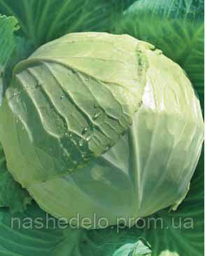 Семена капусты б/к Славанова 0,5 кг. Коуел (Сатимекс)