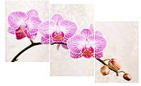 Модульная картина Декор Карпаты 100х53 см Орхидеи, КОД: 184476