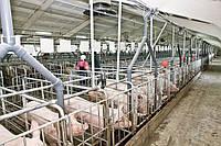 Монтаж вентиляции свинокомплекса