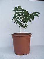 Саженцы редких растений