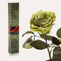 Долгосвежая роза Лаймовый Нефрит 7 карат (средний стебель)