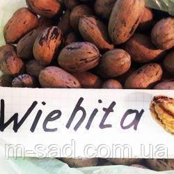 Саженцы ореха Пекан Вишита (однолетние)