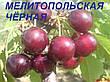 Саженцы черешни Мелитопольская(летний сорт,ранний срок созревания), фото 3