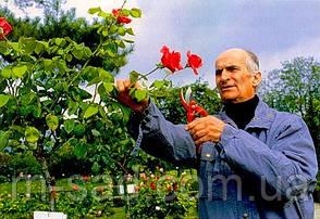 Роза Луи де Фюнес, фото 2