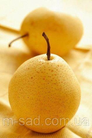 Саженцы груши Лимонка, фото 2