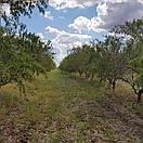 Натуральная миндальная паста, 190г, нежная текстура, украинский живой миндаль, без сахара, фото 7