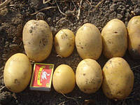 Картофель Агата сетка 3кг.