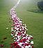 Лепестки роз красные/ 100 шт, фото 2