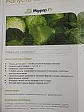 Миррор F1 10 шт семена капусты Syngenta Голландия, фото 2
