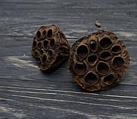 Сухоцветы лотоса 6-8 см 1шт