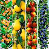 Колоновидные саженцы фруктовых деревьев