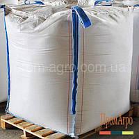 Пшеница озимая, Тацитус, SAATBAU, Элита, Саатбау