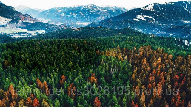 основа естественного изображения LG фото