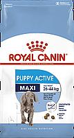 Royal Canin Maxi Puppy Active (РоялКанинМаксиПаппиАктив) - сухой корм для активных щенков крупных пород  15 кг
