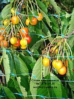Сетка от птиц (4м*100м) защитная на деревья, кустарники, виноградники