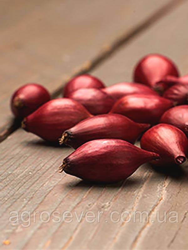 Лук - севок озимый Ред Спирит Голландия 1 кг