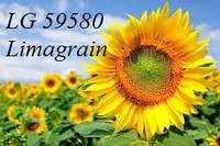 Семена подсолнечника ЛГ 59580 Лимагрейн (под Гранстар)
