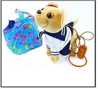 Собачка на повідку в сумочці, фото 1