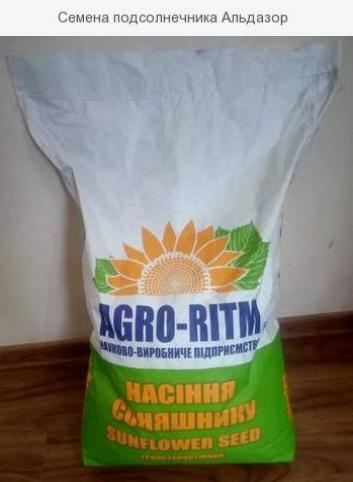 Семена подсолнечника Любаш-Н под Гранстар