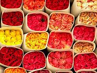 Продажа роз оптом