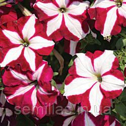 Семена петунии Лавина F1, 50 драже, ампельная крупноцветковая пурпурная звезда