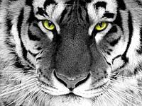 Картина алмазной мозаикой Взгляд тигра DM-281 (30 х 40 см) ТМ Алмазная мозаика
