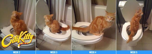 Набор для приучения кошек к туалету CitiKitty Cat Toilet Training Kit