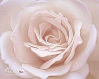 """Рельефные 3D фотообои на гибкой штукатурке Ricchi """"Нежная роза"""" 99смх77,5см"""