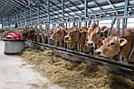 Необходимость применения антибиотиков и пробиотиков в скотоводстве